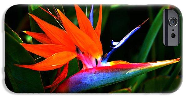 Yellow Bird Of Paradise iPhone Cases - Beauty in Paradise - Bird of Paradise iPhone Case by Susanne Van Hulst