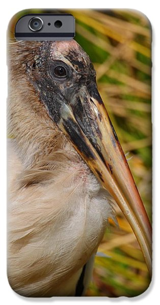 Stork iPhone Cases - Beauty Is Only Skin Deep iPhone Case by Bruce J Robinson