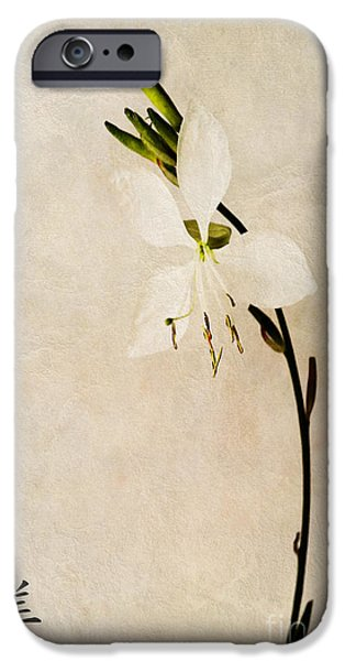 Beauty iPhone Case by John Edwards