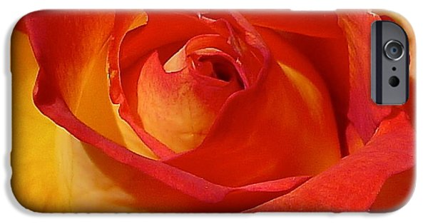 Rose Petal Sorbet iPhone Cases - Beauty Unfurled iPhone Case by Denise Mazzocco