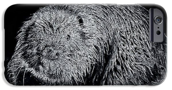 Beaver Digital iPhone Cases - Beaver 1 iPhone Case by Todd Hostetter