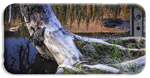 Dog And Wildflowers iPhone Cases - Beaver Pond Reflection 2 iPhone Case by Aaron Spong