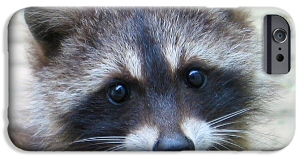 Raccoon Digital Art iPhone Cases - Becky.s Baby iPhone Case by Patricia Januszkiewicz