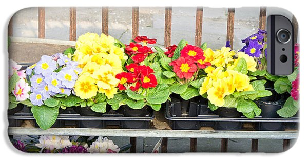 Primroses iPhone Cases - Bedding plants iPhone Case by Tom Gowanlock