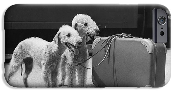 Animal Portraiture iPhone Cases - Bedlington Terriers, Austria iPhone Case by Andy Bernhaut