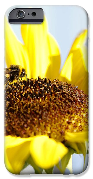 Pollinate iPhone Cases - Bee and flower iPhone Case by Les Cunliffe