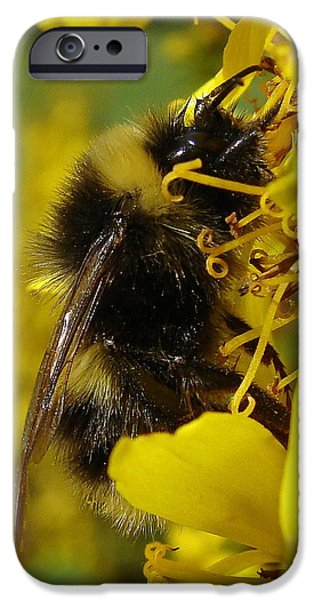 Wildlife Imagery iPhone Cases - Bee Close Up iPhone Case by Ramona Johnston