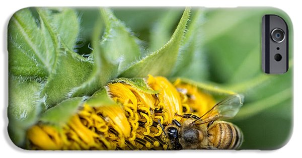 Sunflowers Photographs iPhone Cases - Bee collecting pollen on a sunflower iPhone Case by Edward Fielding