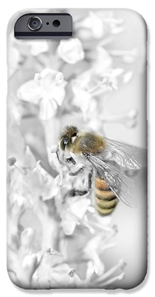 Flora Mixed Media iPhone Cases - Bee collecting pollen iPhone Case by Toppart Sweden