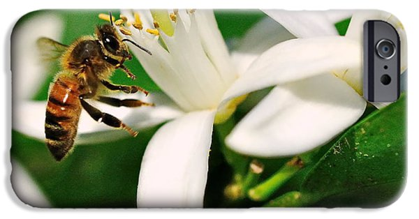 Bee iPhone Cases - Bee Bees for Honey Gently Flies iPhone Case by Wayne Nielsen