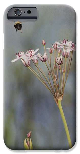 Jeff Swanson iPhone Cases - Bee Gone iPhone Case by Jeff Swanson
