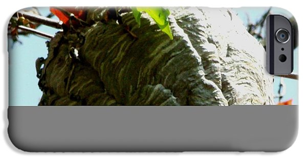 Hornets Nest iPhone Cases - Bee Hive up High iPhone Case by Gail Matthews