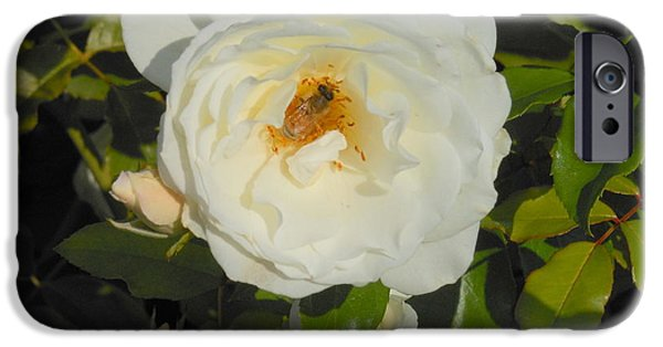 Windy Point Winery iPhone Cases - Bee in a White Rose iPhone Case by Kay Gilley