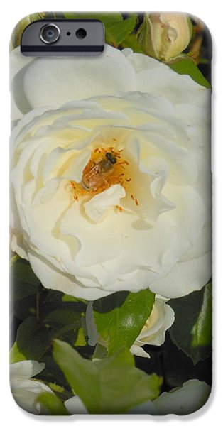Bee in a White Rose iPhone Case by Kay Gilley