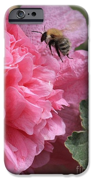 Hollyhock iPhone Cases - Bee in the Hollyhocks iPhone Case by Carol Groenen