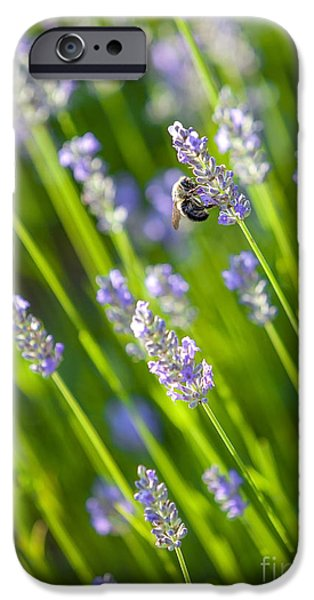 Bee iPhone Cases - Bee on a Lavender Flower iPhone Case by Diane Diederich