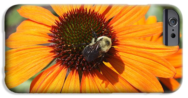Botanical Photographs iPhone Cases - Bee on Flower iPhone Case by John Telfer