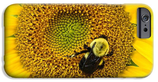 Disc iPhone Cases - Bee on Sunflower iPhone Case by Photographic Arts And Design Studio
