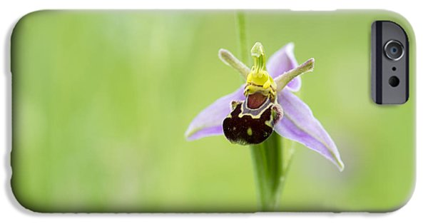 Bee iPhone Cases - Bee Orchid iPhone Case by Tim Gainey