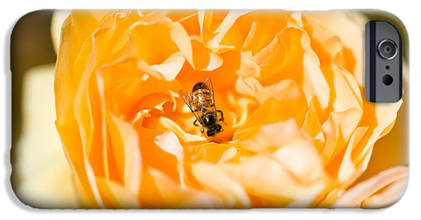 Relationship iPhone Cases - Bee Pollinating A Yellow Rose, Beverly iPhone Case by Panoramic Images