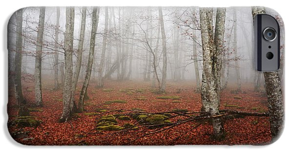 Park Scene iPhone Cases - Beech forest with fog iPhone Case by Mikel Martinez de Osaba