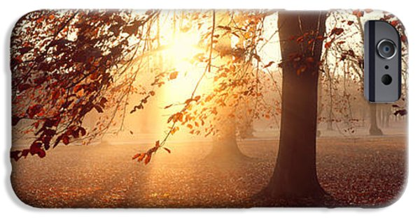 Illumination iPhone Cases - Beech Trees Uppland Sweden iPhone Case by Panoramic Images