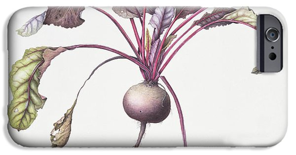 Roots iPhone Cases - Beetroot, 1995 Wc On Paper iPhone Case by Margaret Ann Eden