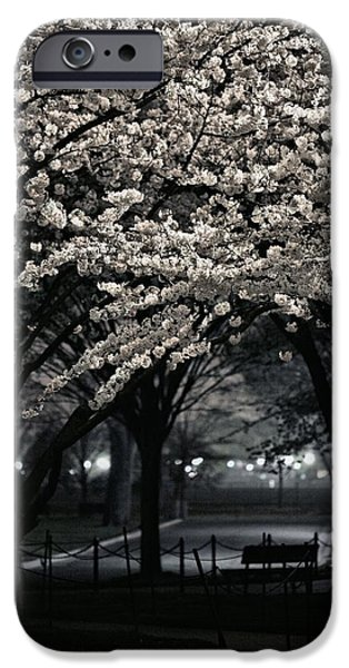 Cherry Blossoms iPhone Cases - Before the Hoopla  iPhone Case by JC Findley