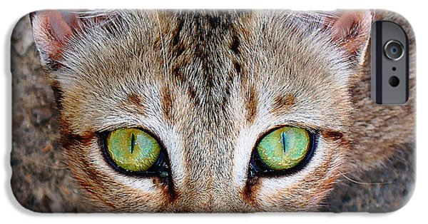 Stray iPhone Cases - Begging.. iPhone Case by Nina Stavlund