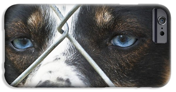 Husky iPhone Cases - Behind Fences iPhone Case by Heiko Koehrer-Wagner