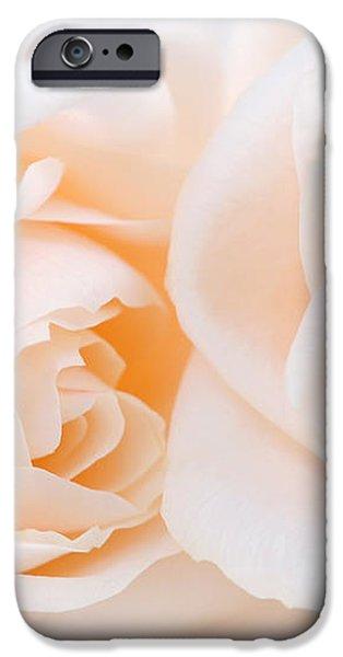 Beige roses iPhone Case by Elena Elisseeva