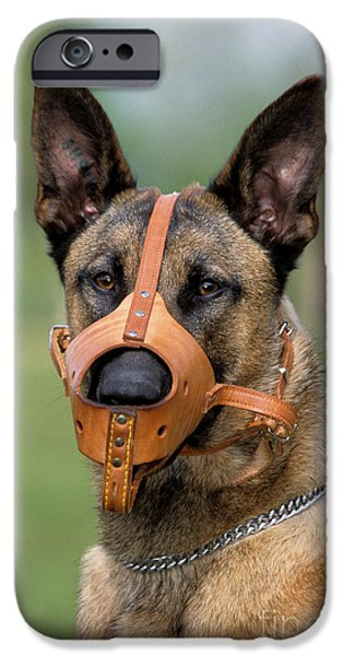 Dog Close-up iPhone Cases - Belgian Malinois With Muzzle iPhone Case by Johan De Meester