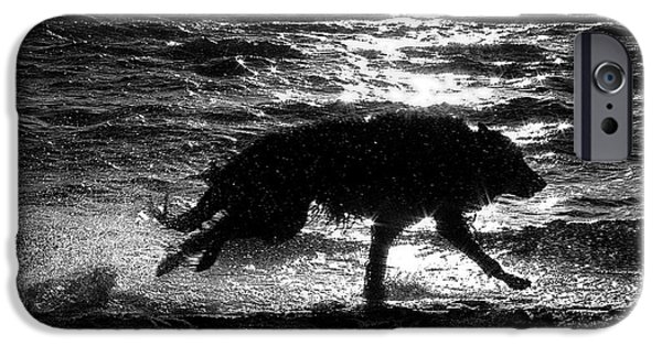 Black Dog iPhone Cases - Belgian Shepherd Groenendael running along sea shore iPhone Case by Wolf Shadow  Photography