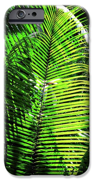 Best Sellers -  - Mangrove Forest iPhone Cases - Belize Caracol Jungle iPhone Case by Joan  Minchak