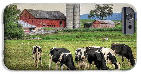 Barnyard Digital Art iPhone Cases - Belleville Cows iPhone Case by Lori Deiter