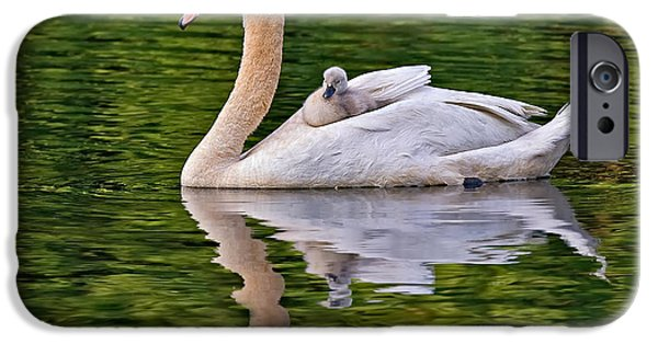 Swan iPhone Cases - Beloved Hitchhiker iPhone Case by Susan Candelario