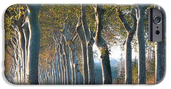 Cathar Country iPhone Cases - Beloved Plane Trees iPhone Case by France  Art