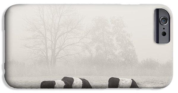 Fog Mist iPhone Cases - Belted Galloway Cows On foggy Farm Field In Maine iPhone Case by Keith Webber Jr
