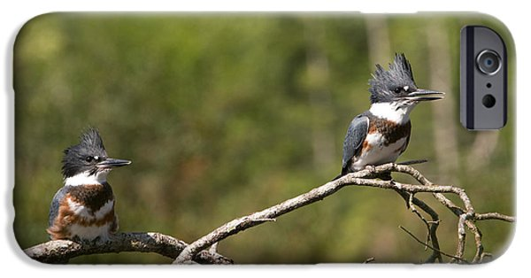 Baby Bird iPhone Cases - Belted Kingfishers iPhone Case by Peggy Collins