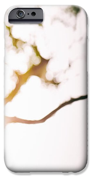 Beneath a tree 14 4945 triptych set 3 of 3 iPhone Case by Ulrich Schade