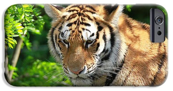 Large Cats iPhone Cases - Bengal Tiger Portrait iPhone Case by Dan Sproul