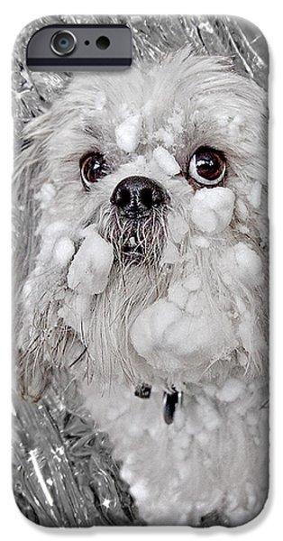 Benji iPhone Case by David Kehrli