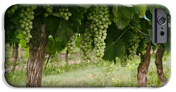 Vineyard Photograph iPhone Cases - Bergerac Grapes iPhone Case by Nomad Art And  Design