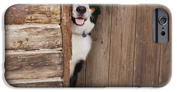 Christmas Greeting iPhone Cases - Bernese Mountain Dog At Log Cabin Door iPhone Case by John Daniels