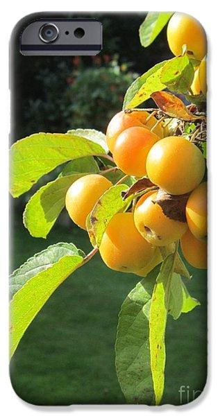 Berries iPhone Cases - Berries in Sunlight iPhone Case by John Clark