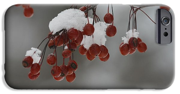 Resilience iPhone Cases - Berries in the Snow iPhone Case by TB Sojka