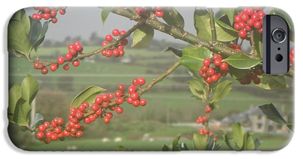 Berry iPhone Cases - Berry Holly iPhone Case by Margaret McCarthy