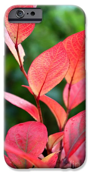 Rainy Day iPhone Cases - Berry Leaves In October iPhone Case by Violeta Ianeva