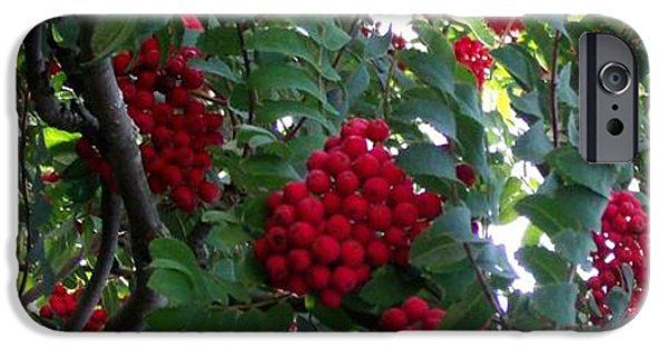 Berry iPhone Cases - Berry Red iPhone Case by Gail Matthews