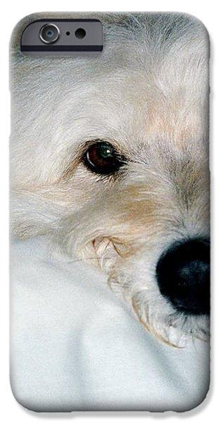Bessie Eyes iPhone Case by Randi Shenkman